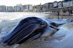 la-baleine-s-est-echouee-sur-la-celebre-concha