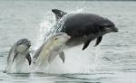 Tursiopspdelfines