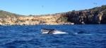 Una ballena en aguas de Ibiza. | OctopusC