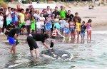 El equipo de biólogos hizo un primer examen del cadáver del animal en la orilla de la playa. :: IRENE MARSILLA