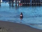lobo-marino-cuella-cuerda-2