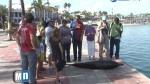 delfin-varado-Mexico