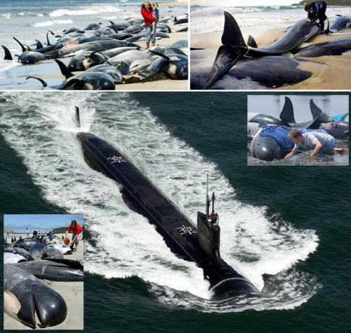 Global-Baleine-sonars