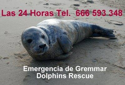 tel-urgence-Gremmar