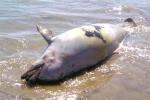 delfin_muerto