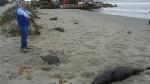 Funcionarios de la defensoría también hallaron delfines muertos en Colán.
