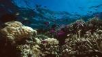 Australia posee uno de los tesoros marinos más importantes del mundo, de ahí que las autoridades busquen preservarlo (Getty Images/Archivo).