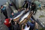 delfines.Cantabria