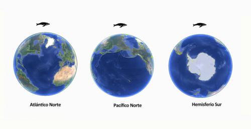 oceanos-ballena-jorobada