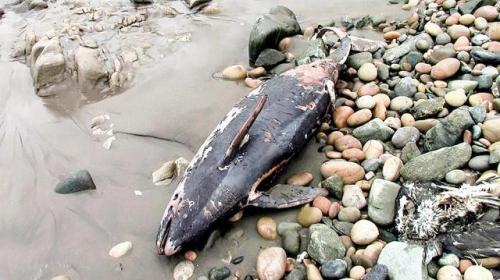 imagen-26-1-b-rep-delfin-muerto