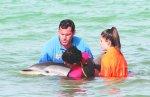 El delfín fue atendido en todo momento a partir de cuando se acercó a la playa. Foto : Pere Ferré