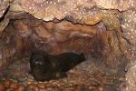 Diorama de la foca monje del Mediterráneo en una cueva, en el Museo Cívico de Historia Natural de Milán. Foto de Giovanni Dall'Orto/Creative Commons 2.5, Italy.