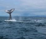 Parque Marino reforzará la vigilancia en el mar de sus delfines y ballenas.