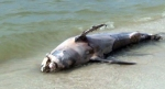 delfin-varado-Campeche