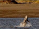 delfines_del_rio_negro_10_10_2014
