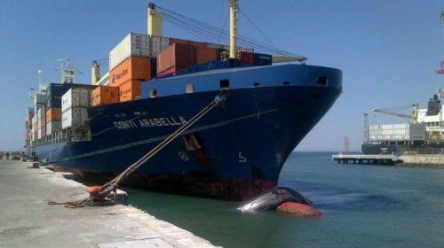 Esta otra foto muestra al barco anclado en el muelle y la ballena aún ahí. (Foto : Cortesía Noticias Piura 3.0)