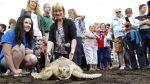 La segunda oportunidad de Leona, la tortuga que se perdió en la fría IrlandaEFE