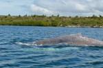 ballena-harponeada