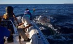 ballenaenmayada