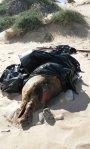 El delfín muerto. :: LP