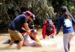 """Rescate : Miembro de Omacha dijo """"salvarle la vida a estos dos ejemplares hembras contribuye a la conservación de esta especie de delfín""""."""
