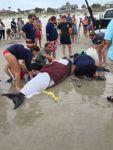pygmy-sperm-whale-Neptun-beach-Florida