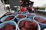 Trabajadores japoneses cargando un camión con carne de ballena en el puerto de Wada, Japón. EFE/Archivo