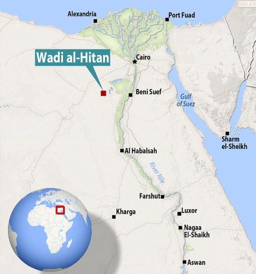 El descubrimiento fue efectuado en Wadi al Hitan (Valle de Las Ballenas), situado en la provincia de Al Fayum y famoso por albergar una gran cantidad de fósiles de cetáceos