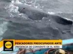 ballena-jorobada-Lambayeque