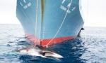 caza-ballena-Japon