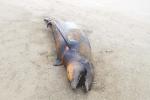 Reportan la muerte de especies; investiga la Profepa. Foto : Zócalo | Agencias
