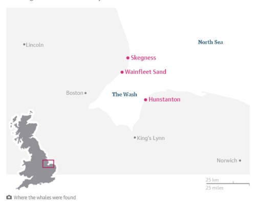 map-beached-sperm-whales-UK