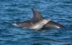 delfines-madre-y-cria