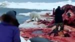oso-polar-matanza