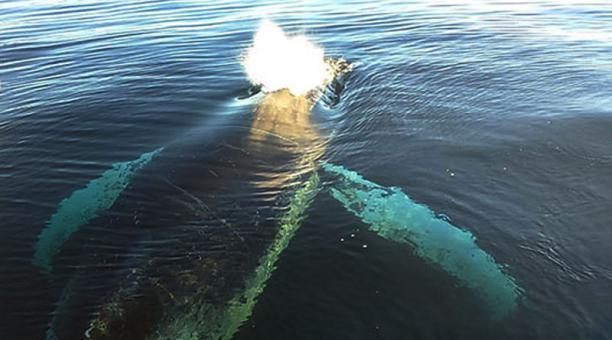 chilena redes de pesca