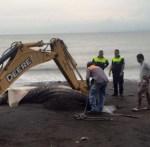 tiburon-ballena-Costa-Rica