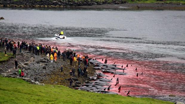 Pese al diseño de una expedición para investigar las causas de la muerte de 124 ballenas en Chile, el Comité Nacional Pro Defensa de la Flora y Fauna (Codeff) criticó la marcha del proceso.