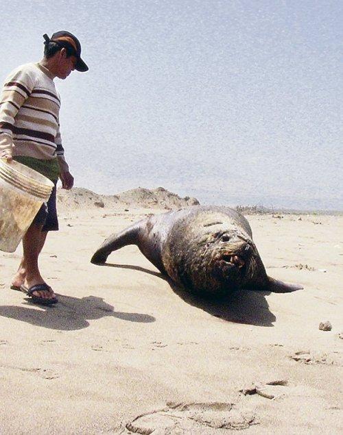 Serio problema en playa